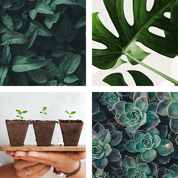 Four square images containing plants