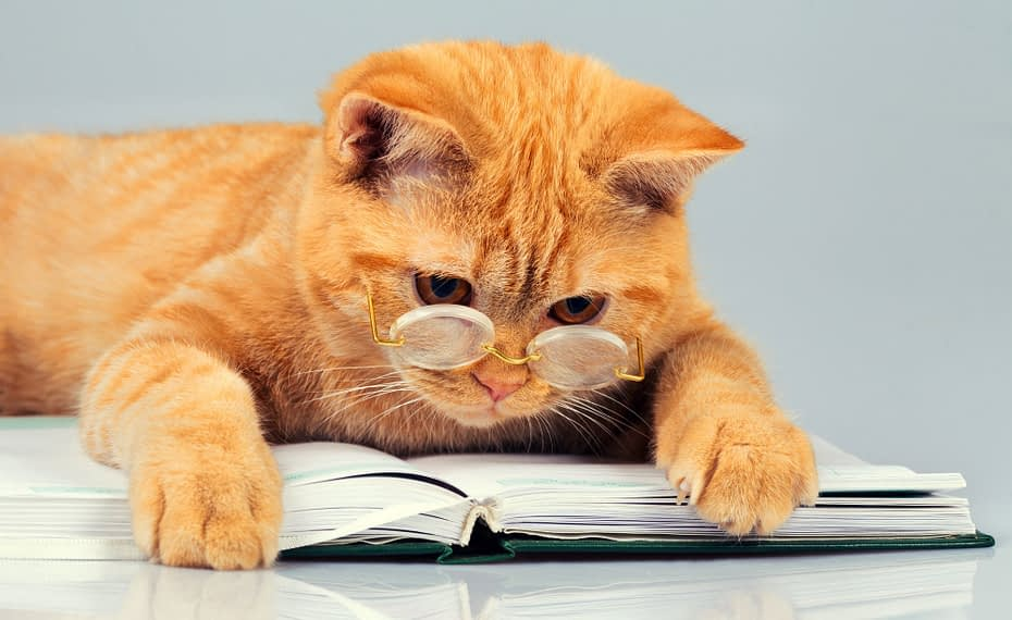 A ginger cat reading