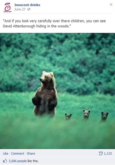 innocent bear