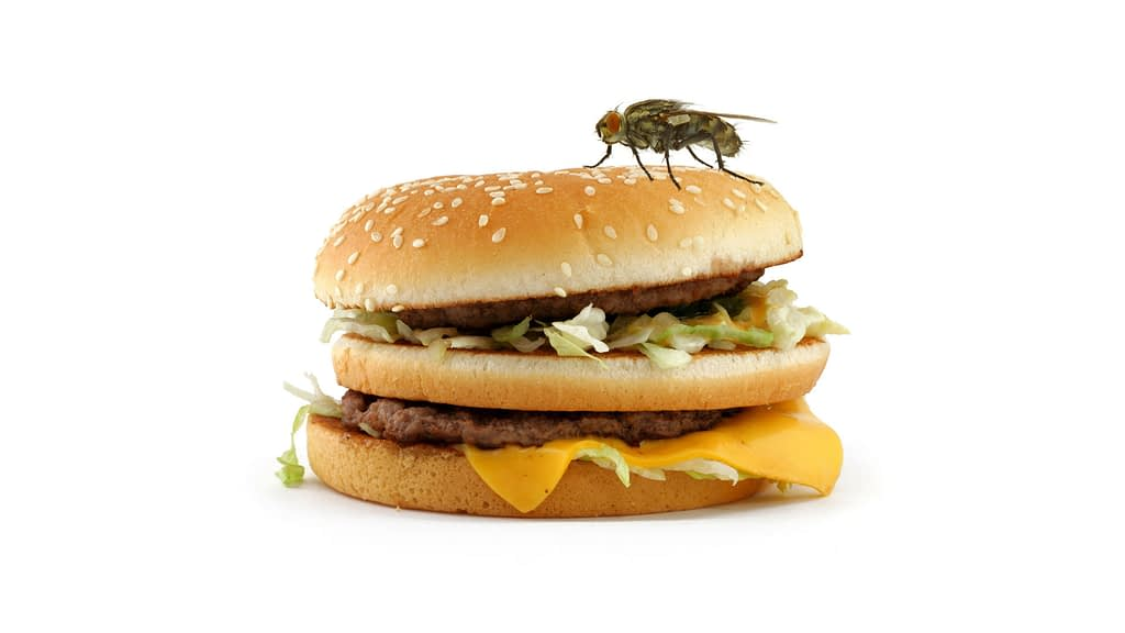 A dity burger with a fly on it