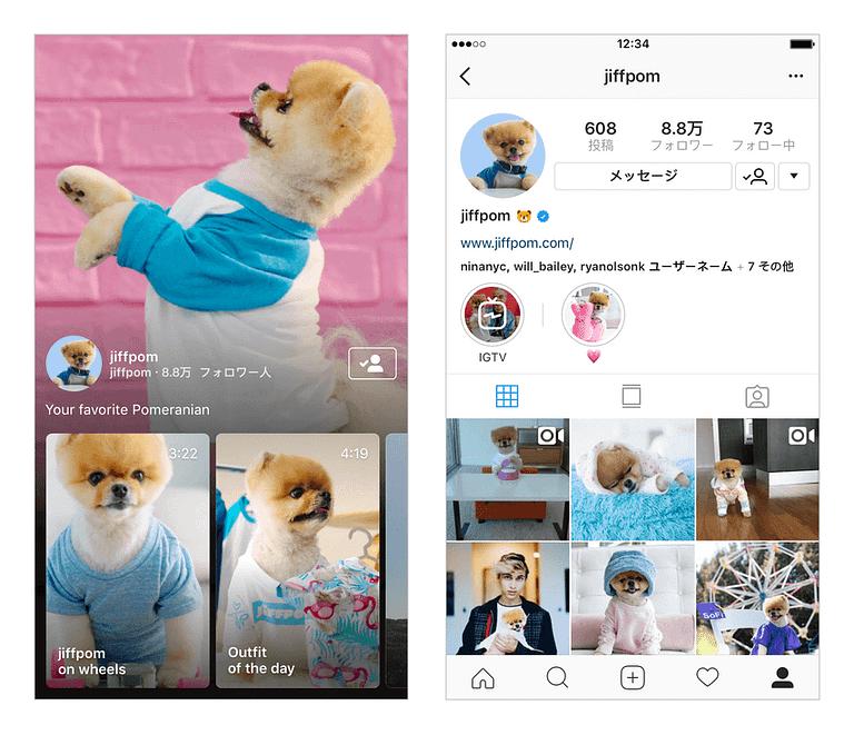 Pomeranian on instagram