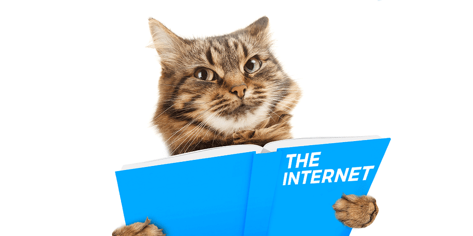 Cat reading a book called the internet